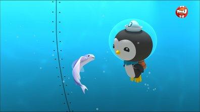 Les octonauts et les poissons volants - Octonauts