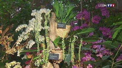 Les orchidées à l'honneur dans les serres du Jardin des Plantes à Paris