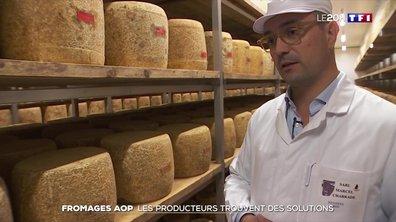 Les producteurs de fromages AOP en difficulté dans le Cantal
