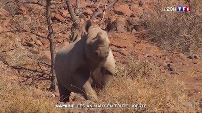 Les rois de la Namibie : à la rencontre de ces animaux en totale liberté