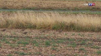 Les trésors du Loir-et-Cher : les perdrix rouges