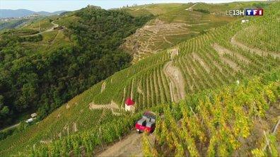 Les vendanges de l'extrême (1/4) : à la découverte du vignoble de Côte-Rôtie dans la Vallée du Rhône