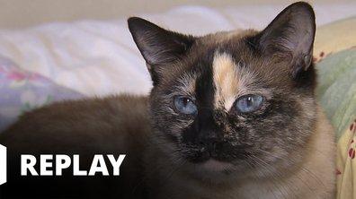 La vie secrète des chats - Du chat des villes au chat des champs...