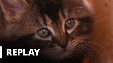 La vie secrète des chats - Les chats champions de France