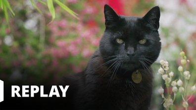 La vie secrète des chats - La langue du chat