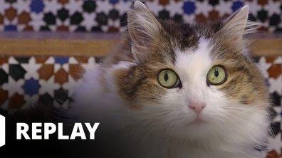 La vie secrète des chats - Malin comme un chat !
