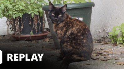 La vie secrète des chats - Le chat : meilleur ami de l'homme ?