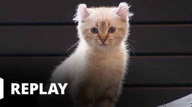 La vie secrète des chats - Mon chat, mon enfant et moi