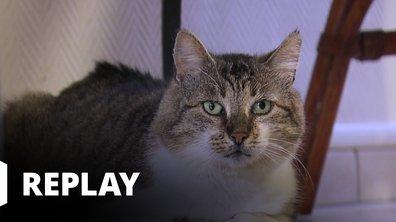 La vie secrète des chats - Naturellement chat ! Avec Mylène Demongeot