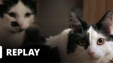 La vie secrète des chats - Petits conflits entre voisins