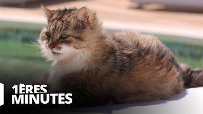 La vie secrète des chats revient pour une nouvelle saison ! Découvrez les 1ères minutes