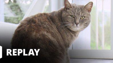 La vie secrète des chats - Un chat de luxe