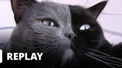 La vie secrète des chats - Le tour de France des chats