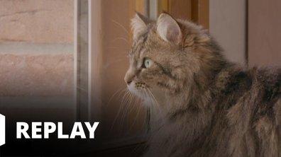 La vie secrète des chats - Une vie (casanière) de chat