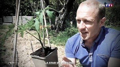 """""""Ma nouvelle vie"""" : Olivier Puech, la star du potager"""