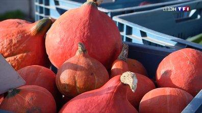 Marché d'automne : les légumes d'hiver ont la cote à Cysoing