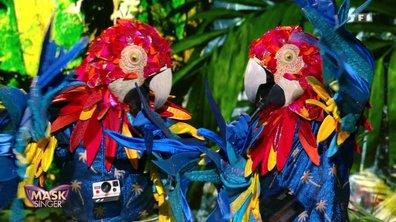 RÉVÉLATION - Qui sont les Perroquets de Mask Singer ?