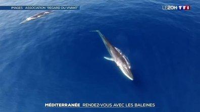 Méditerranée : rendez-vous avec les baleines