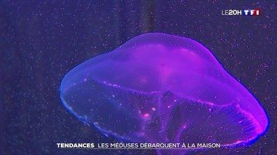 Méduses, les nouvelles stars des aquariums