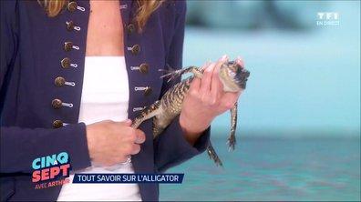 La Belle et les bêtes : Même pas peur des alligators !