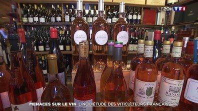 Menaces sur le vin : l'inquiétude des viticulteurs français