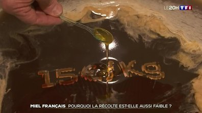 Miel français : pourquoi la récolte est-elle aussi faible ?