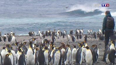 Mission en Terres australes : à la découverte de l'île aux Cochons dans l'archipel de Crozet