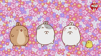 Molang - compilation St Valentin