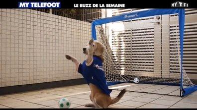 MyTELEFOOT - Le Buzz de la semaine : le chien gardien !