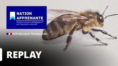 Curieuse de nature - A la découverte de la vie bourdonnante de l'abeille à Bougie (Algérie)