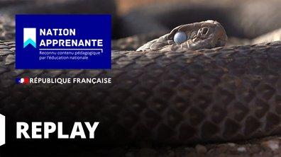 Curieuse de nature - A la découverte de la vie torride du cobra au Sahara (Maroc)