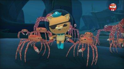 Les octonauts et le crabe araignée géant - Octonauts