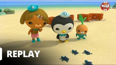 Octonauts - Les Octonauts & les bébés tortues de mer