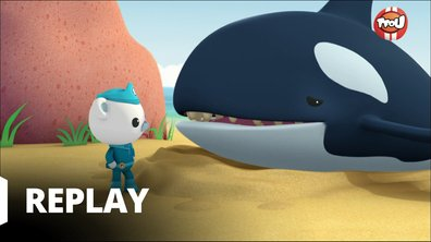 Octonauts - Les octonauts et les orques