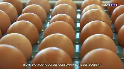 Oeufs bio : pourquoi les consommateurs les boudent