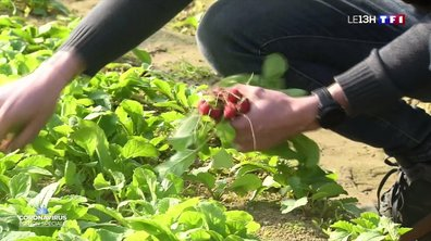 On pourra cumuler chômage partiel et travail dans les champs, en soutien aux agriculteurs