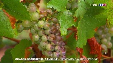 Orages, sécheresse, canicule... Le vignoble à rude épreuve