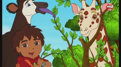 Où se cachent les okapis ? - Diego