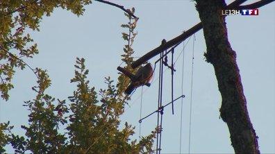 Ouverture de la chasse à la palombe à Pellegrue