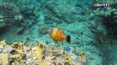 Parc national de la Guadeloupe : voyage entre terre et mer