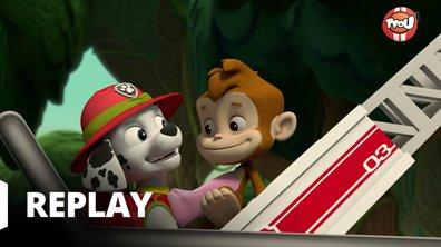 Paw Patrol, la Pat'Patrouille - A la rescousse des trois singes