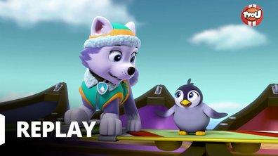 Paw Patrol, la Pat'Patrouille - Le bébé pingouin