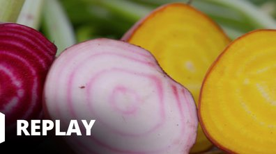 Petits plats en équilibre : sur la route des vacances - Betterave