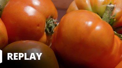 Petits plats en équilibre : sur la route des vacances - Tomate