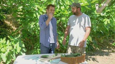 Petits plats en équilibre : sur la route des vacances - Concombre