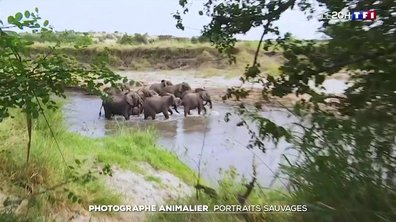 Photographe animalier : portraits sauvages