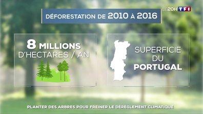 Planter des arbres pour freiner le dérèglement climatique