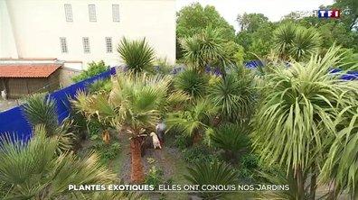 Plantes exotiques : elles ont conquis nos jardins