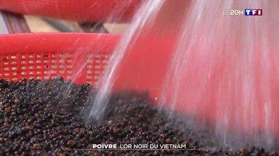 Poivre, l'or noir du Vietnam