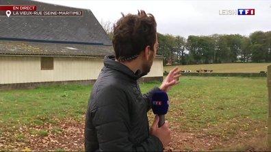 Pollution à Rouen : des animaux restent exposés à l'extérieur malgré les recommandations